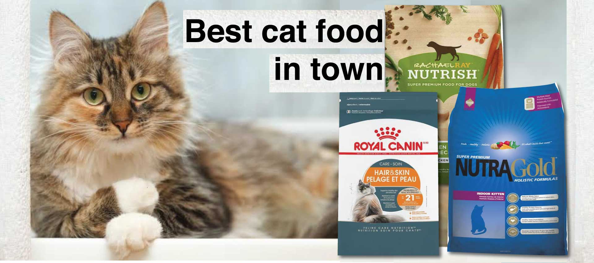 Cat Food In Pakistan Healthy And Nutritious